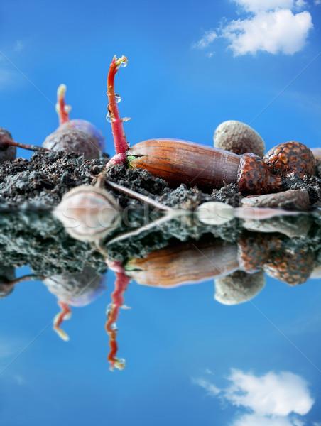 Printemps gland pouvoir nature Pâques eau Photo stock © kaczor58