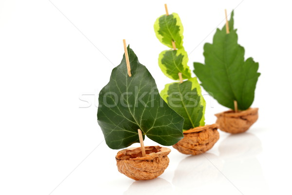 Voilier marines noix shell feuille verte nature Photo stock © kaczor58