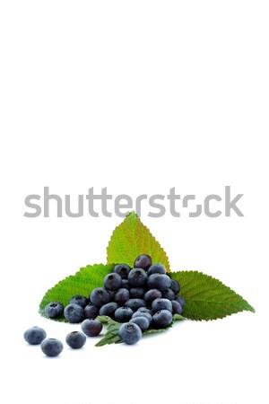 BlackBerry fruits récolte temps Photo stock © kaczor58