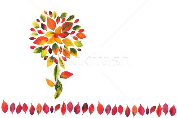 украшение красивой аннотация лист Сток-фото © kaczor58