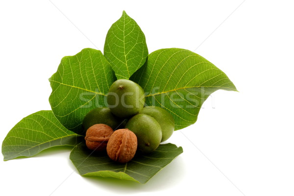 Walnut on green leaf Stock photo © kaczor58