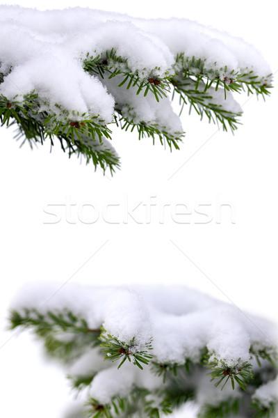 Stockfoto: Christmas · tijd · evergreen · sparren · boom · vorst