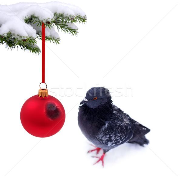 Рождества время заморожены голубь дерево глаза Сток-фото © kaczor58