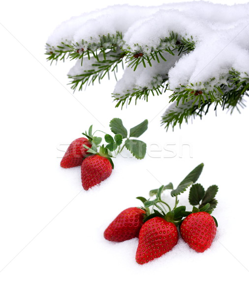свежие клубники снега расти вверх Валентин Сток-фото © kaczor58