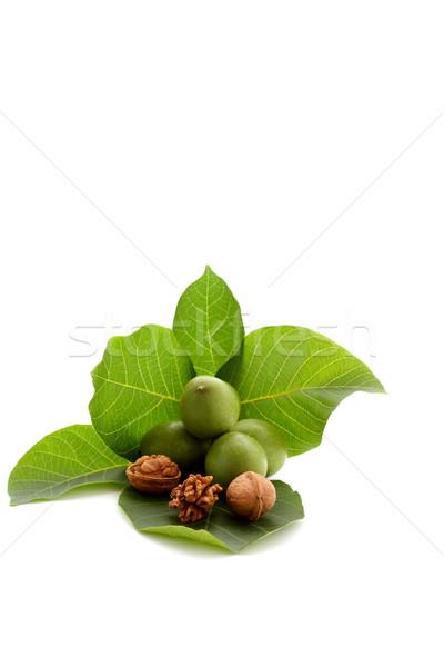 Noix feuille verte temps automne fruits vert Photo stock © kaczor58
