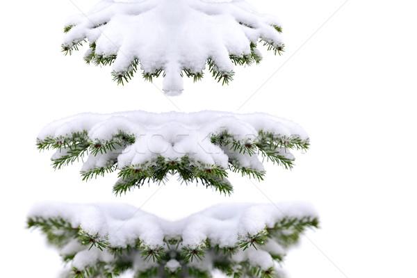 Рождества время вечнозеленый ель дерево мороз Сток-фото © kaczor58