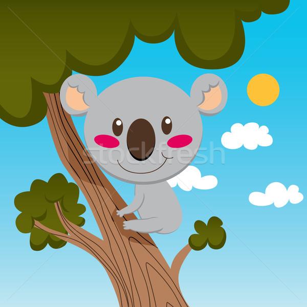 Koala fa kicsi mosolyog magas faág Stock fotó © Kakigori