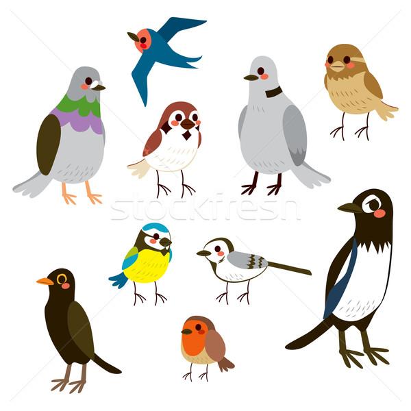 Bird Collection Set Stock photo © Kakigori