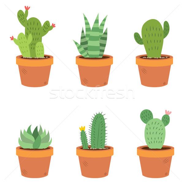 Cactus Set Collection Stock photo © Kakigori