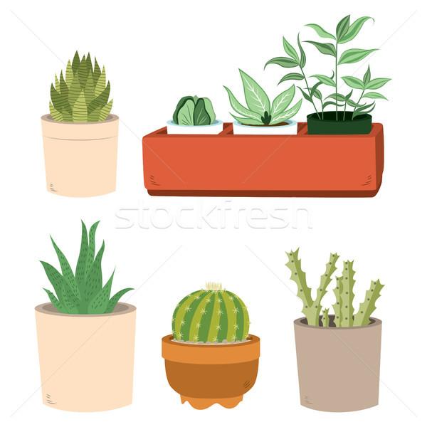 Cactus In Pots Set Stock photo © Kakigori