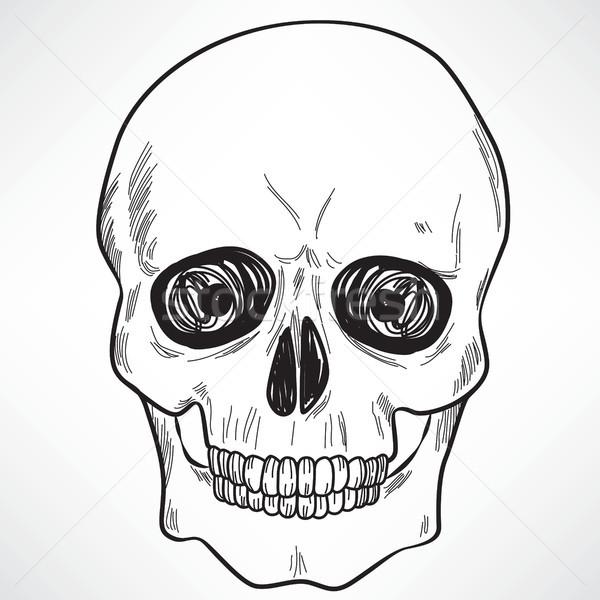 Human Skull Stock photo © Kakigori