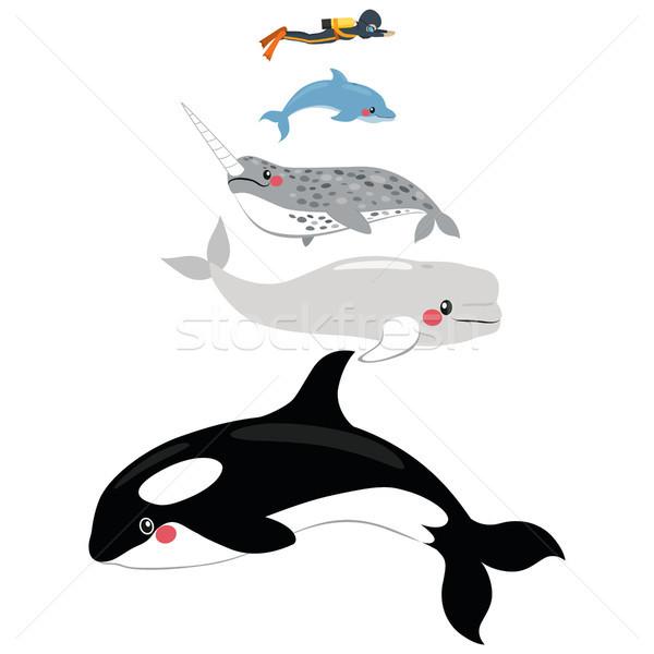 Marine mammifero scala infografica illustrazione diverso Foto d'archivio © Kakigori