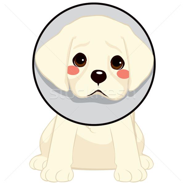 Cão cone bonitinho pequeno triste vergonha Foto stock © Kakigori