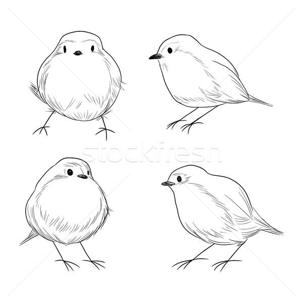 Robin Bird Line Art Stock photo © Kakigori