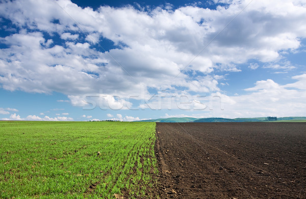 Green wheat field brown soil and blue sky stock photo for Soil and green