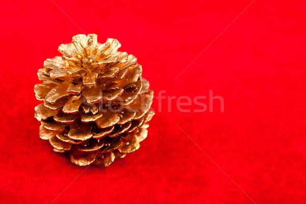 Closeup view of golden pine cone Stock photo © kalozzolak