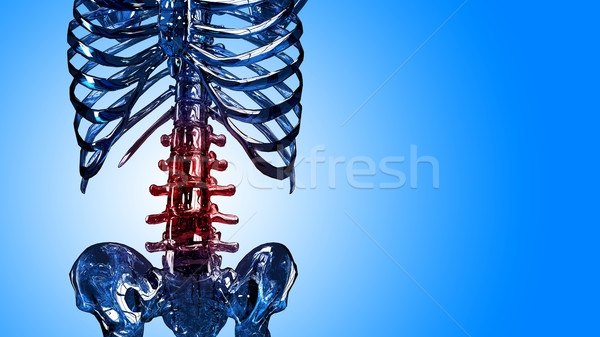 Detail of skeleton spinal and rib in pain Stock photo © kalozzolak