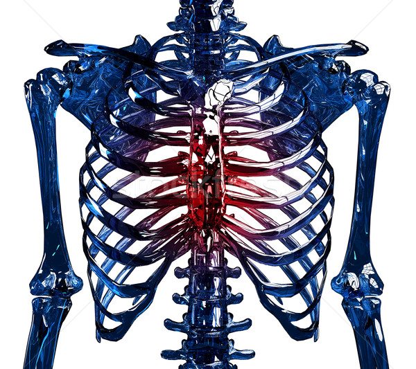 Esqueleto dor ver humanismo peito costelas Foto stock © kalozzolak