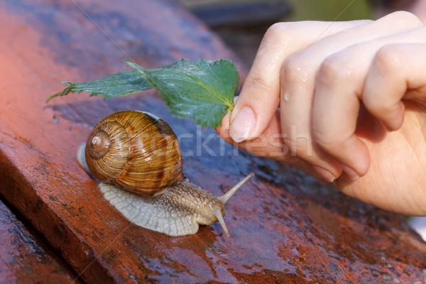 Snail in the rain Stock photo © kalozzolak