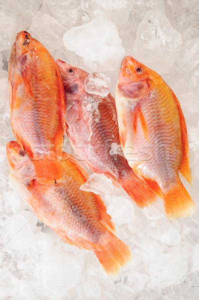 Fish. Stock photo © karammiri