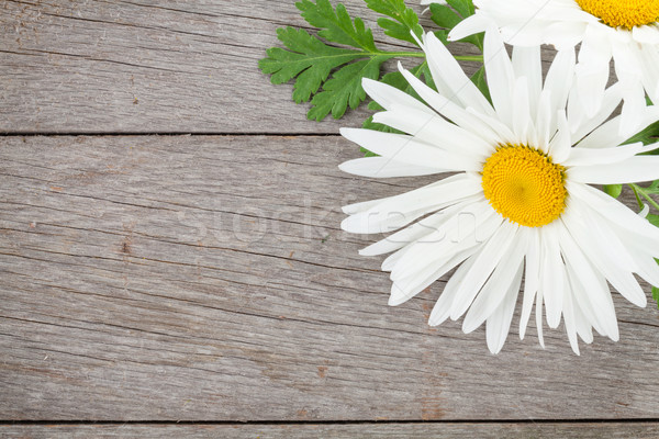 Gänseblümchen Kamille Blumen Holztisch Kopie Raum Blatt Stock foto © karandaev
