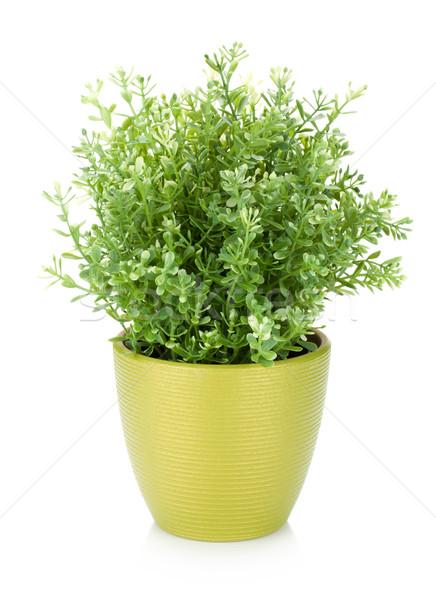 Сток-фото: декоративный · цветок · цветочный · горшок · изолированный · белый · Пасху