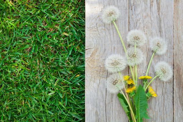 Photo stock: Pissenlit · fleurs · bois · herbe · printemps