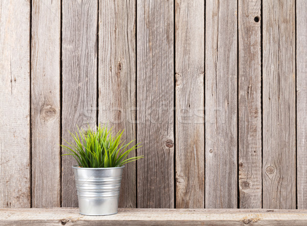 Plant in flowerpot on shelf Stock photo © karandaev