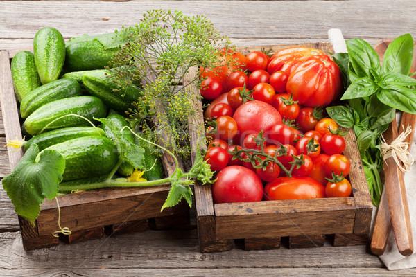 Fresh garden tomatoes and cucumbers Stock photo © karandaev