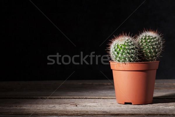 Cactus donkere muur houten tafel exemplaar ruimte Stockfoto © karandaev