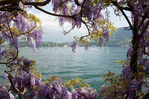 Lake Como landscape Stock photo © karandaev