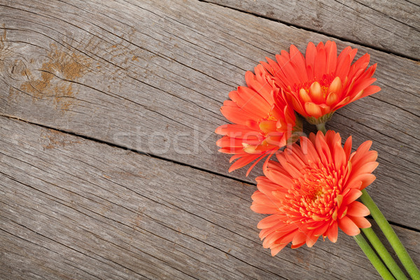 Orange gerbera flowers Stock photo © karandaev