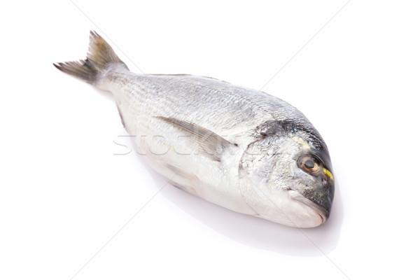 Fresh dorado fish Stock photo © karandaev