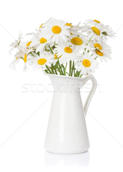 Daisy manzanilla flores ramo aislado blanco Foto stock © karandaev