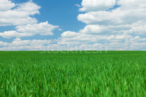 Green grass field and blue sky with clouds Stock photo © karandaev