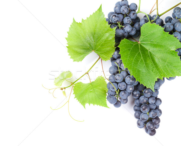 Bunch of grapes Stock photo © karandaev
