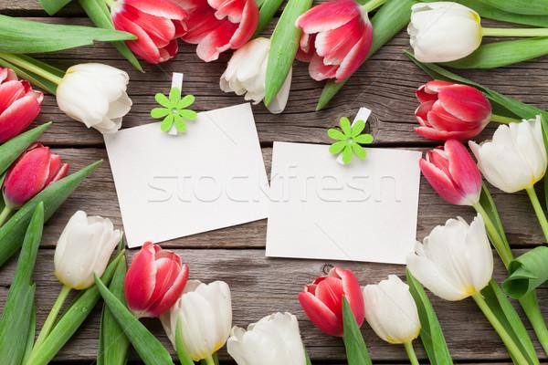 Zdjęcia stock: Kolorowy · tulipany · Fotografia · ramki · dwa