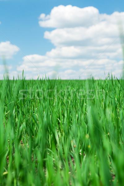 Groen gras veld blauwe hemel wolken zomer landschap Stockfoto © karandaev