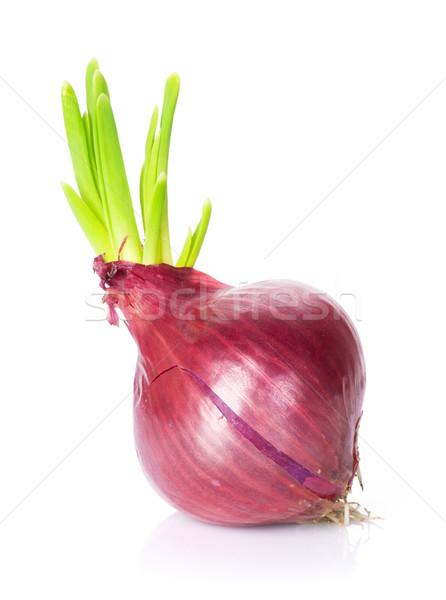 Fresh garden red onion Stock photo © karandaev