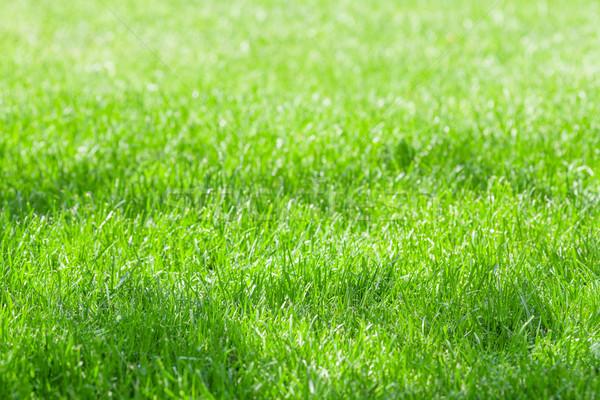 Green grass field Stock photo © karandaev