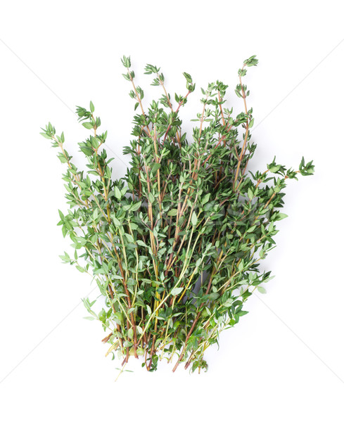 Fresh garden thyme herb Stock photo © karandaev