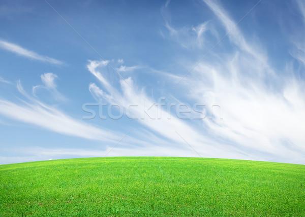 Zielona trawa dziedzinie Błękitne niebo chmury charakter krajobraz Zdjęcia stock © karandaev