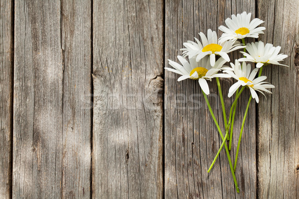 Daisy ромашка цветы букет саду Сток-фото © karandaev