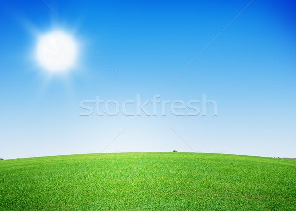 Green grass field and clear blue sky Stock photo © karandaev