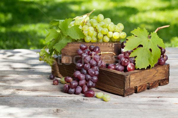 White and red grape Stock photo © karandaev