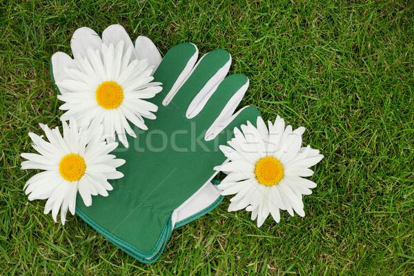 Garden gloves and chamomile flowers Stock photo © karandaev