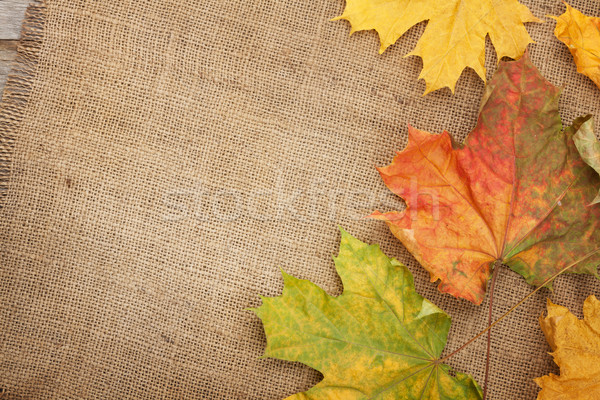 Autumn maple leaves over burlap texture background Stock photo © karandaev