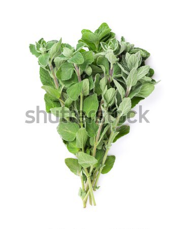 Fresh garden oregano herb Stock photo © karandaev