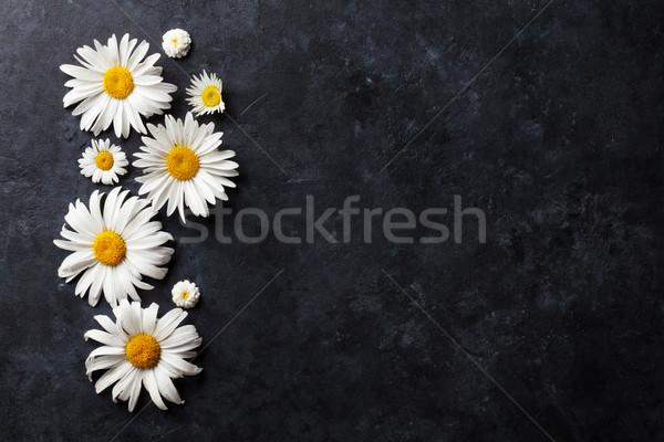 Garten Kamille Blumen Stein Tabelle Hintergrund Stock foto © karandaev