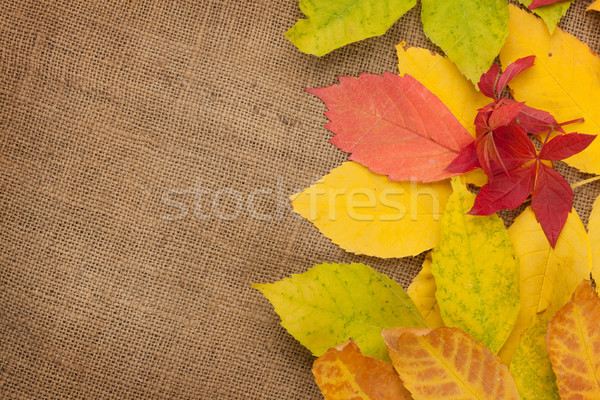 紅葉 黄麻布 テクスチャ コピースペース 自然 芸術 ストックフォト © karandaev